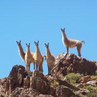 Montañismo en estancia Yalguaraz