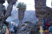 Kilimanjaro aniversario